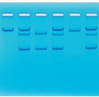 Sickle Cell Gene Detection Kit